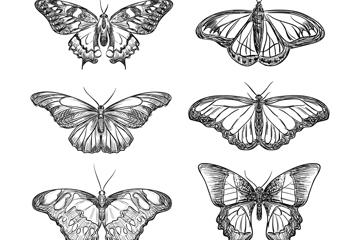 6款逼真手绘蝴蝶矢量素材