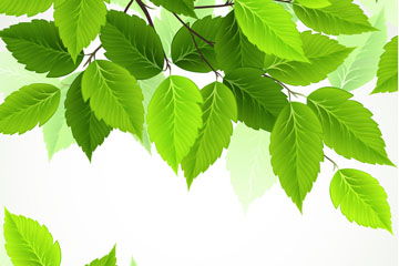 逼真春季绿色树叶矢量素材