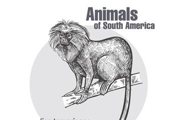 手绘南美洲狮面狨矢量素材