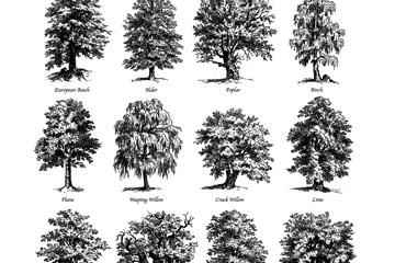 12款手绘茂盛树木矢量素材