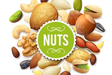 26种美味营养坚果矢量素材