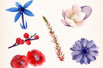 6款水彩绘冬季植物花卉矢量图