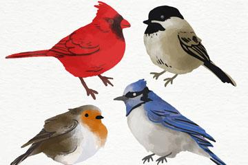 4款水彩绘鸟类设计矢量图