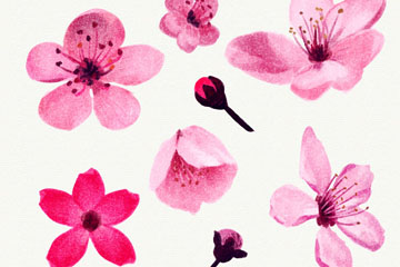 8款粉色樱花和花蕾矢量图