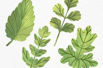 4款彩绘绿色树叶矢量素材