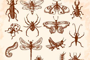15款手绘昆虫设计矢量素材