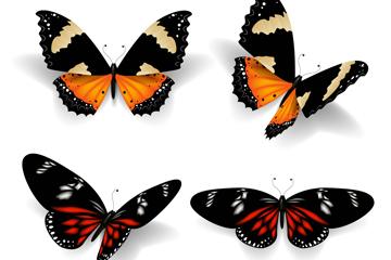 4款美丽花纹蝴蝶矢量素材