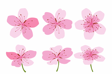 10款彩绘粉色樱花矢量素材