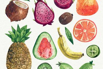 13款水彩绘水果矢量w88优德