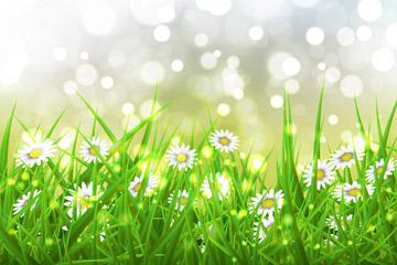 美丽雏菊花丛和光晕矢量素材