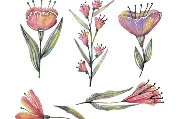 5款水彩绘春季花卉矢量素材