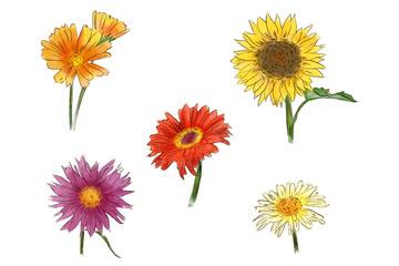 5款彩色春季花卉矢量素材