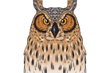 彩绘褐色猫头鹰矢量素材