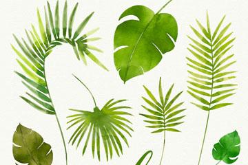 7款水彩绘绿色棕榈树叶矢量图
