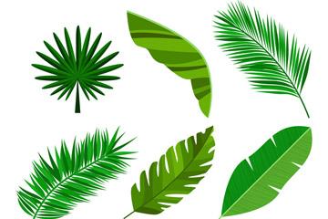 6款绿色棕榈树叶矢量素材