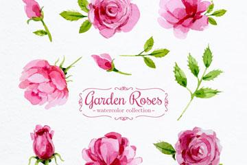 8款水彩绘粉色花园玫瑰花矢量优发娱乐