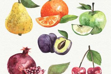 6款水彩绘水果和叶子矢量素材