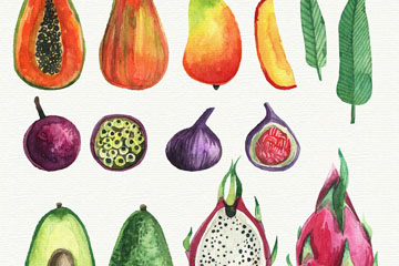 12款水彩绘水果和切面矢量图
