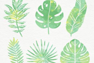 6款水彩绘绿色棕榈树叶矢量图