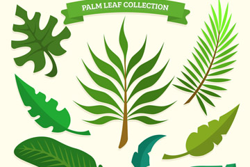 9款绿色棕榈树叶设计矢量图