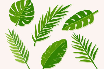 6款绿色棕榈树叶设计矢量素材