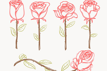 5款手绘玫瑰花矢量素材