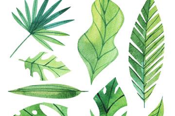 8款绿色棕榈树叶矢量素材