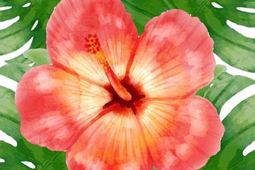 水彩绘红色扶桑花矢量素材