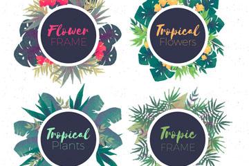 4款彩绘热带花卉框架矢量亚虎娱乐pt