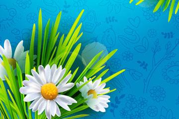 春季白色菊花花束矢量素材