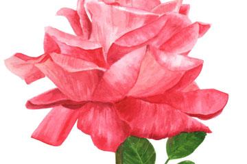 彩绘玫瑰花设计矢量素材