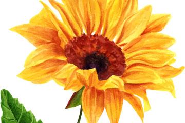 彩绘美丽向日葵花矢量素材