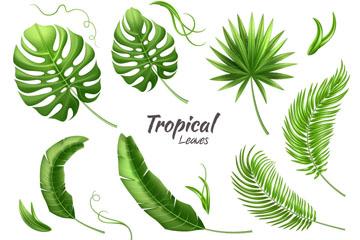 13款绿色热带植物树叶矢量素材