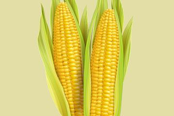 2根逼真玉米设计开户送体验彩金的网站