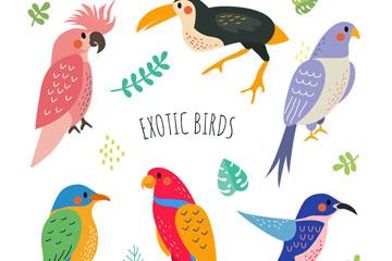 6款彩绘鸟类矢量素材