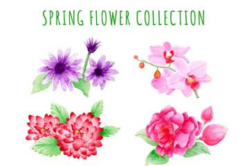 6款彩绘春季花卉矢量素材