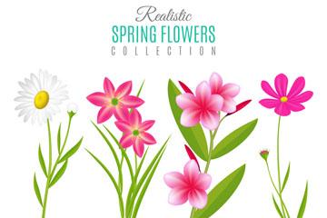 4款创意春季花卉矢量素材