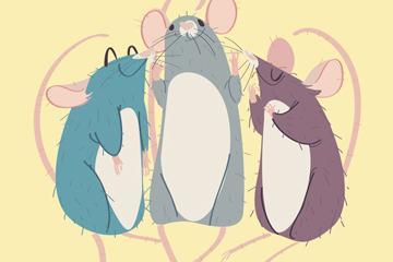彩绘3只老鼠开户送体验彩金的网站