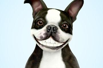 卡通露齿笑的法国斗牛犬矢量图