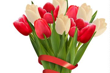 红色丝带围绕的郁金香花束矢量图