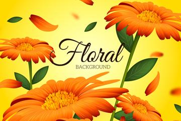 橙色非洲菊设计矢量素材