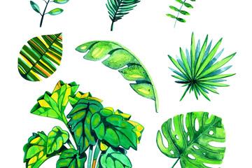 8款水彩绘绿色棕榈树叶矢量素材