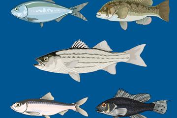 5款彩绘逼真鱼类侧面矢量图