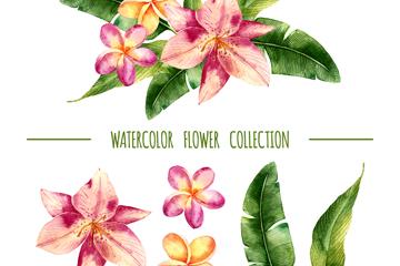 6款水彩绘花卉和叶子矢量素材