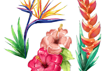 3款水彩绘热带花卉矢量素材