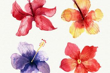 4款水彩绘热带花朵矢量素材