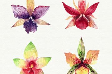 4款水彩绘兰花花朵矢量素材
