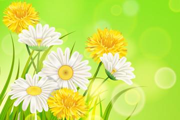 美丽黄色和白色菊花矢量素材