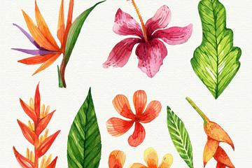 9款彩绘热带花朵和叶子矢量素材