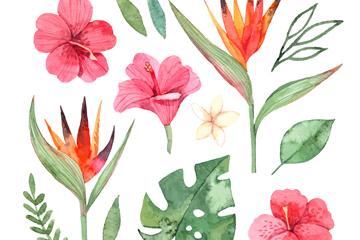 13款彩绘热带花卉和叶子矢量图